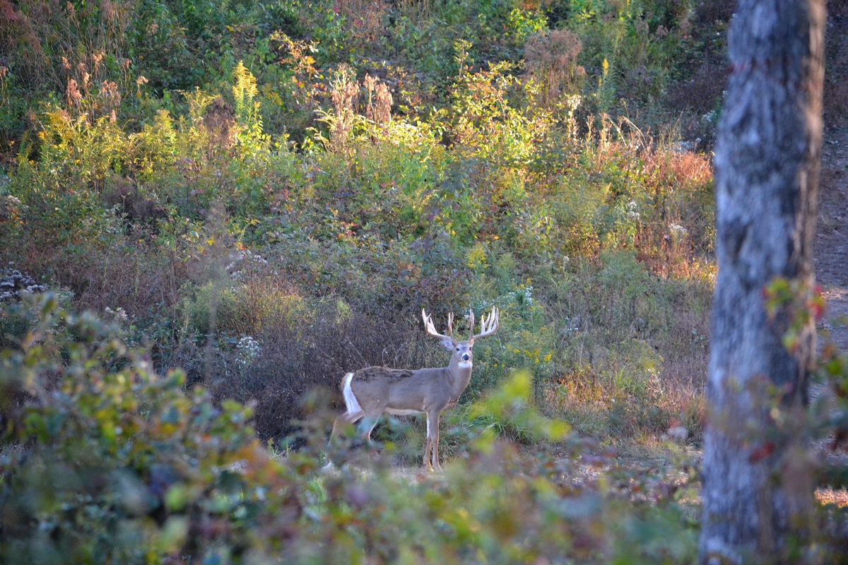 Pre-Rut Trophy Deer Hunts