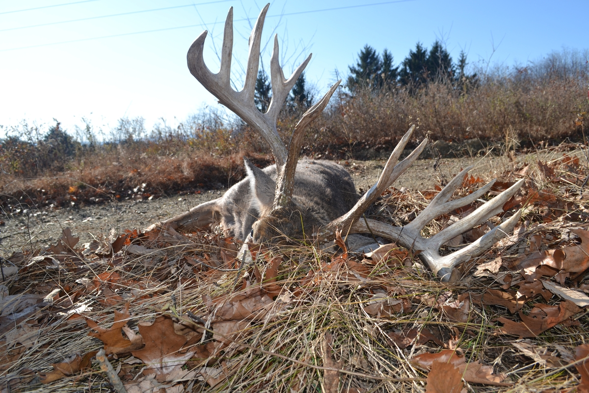 Deer Hunt Packages